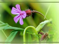 Blume-16-web.jpg