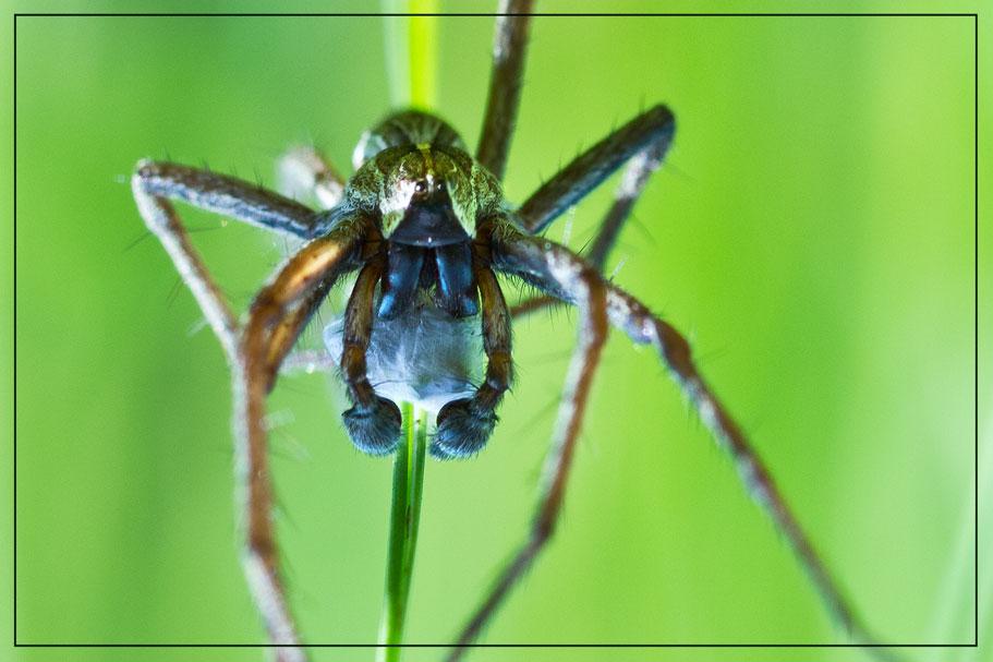 Spinne-5-16web