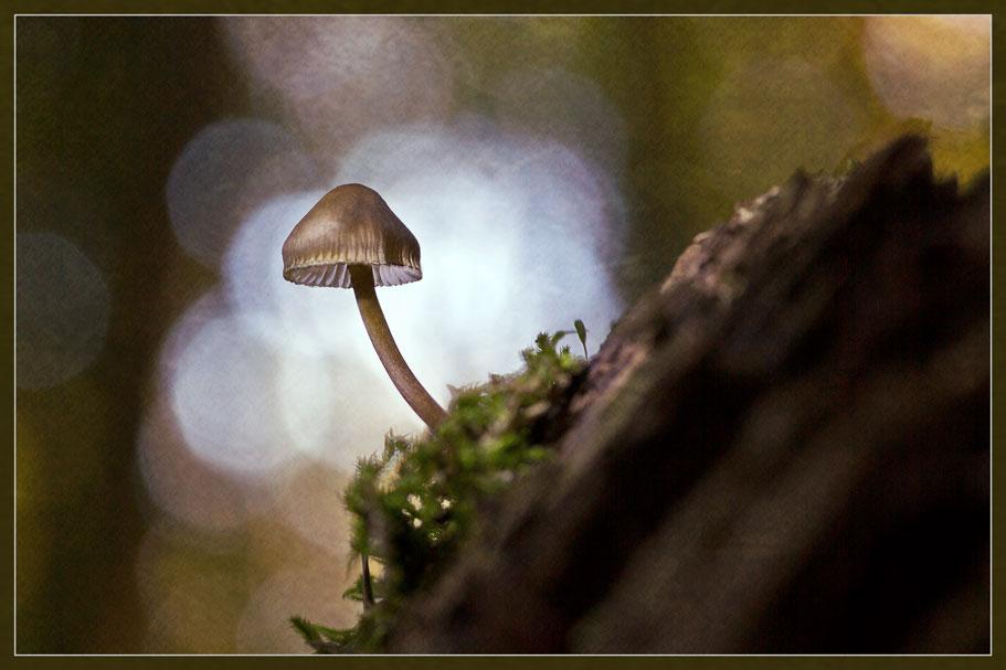 Pilz-im-Gegenlicht-web